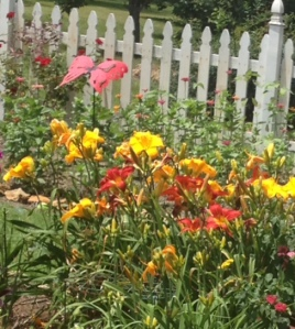 Day Lilies and zinnias