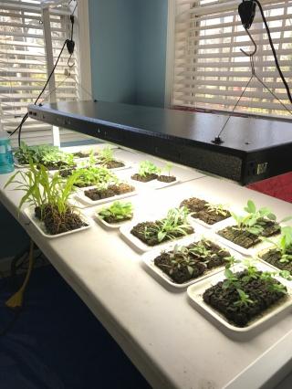 Block Seeding